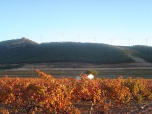 Vides y variedades de vinos de Almansa - Hostal el Estudio en Almansa