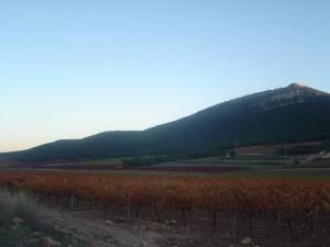 Viñas en Almansa - Historia de los vinos de Almansa - Hostal el Estudio en Almansa